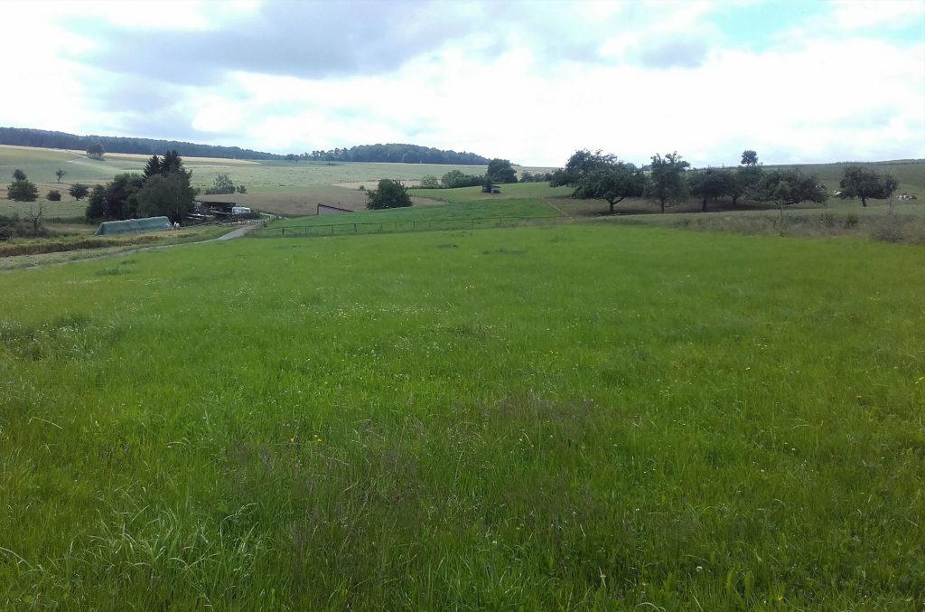 Aktivhof Oelsberg - Oelsberg Landschaft