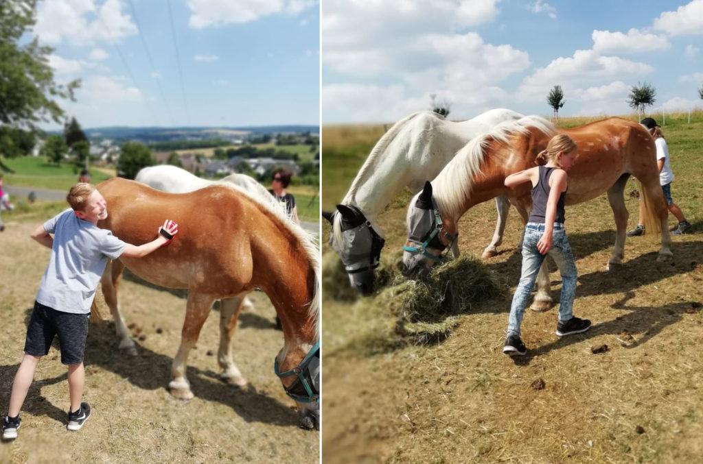 Aktivhof Oelsberg - Ferienprojektwoche 2019 - Hautnah am Pferd - Nachmittagsprogramm - Lynda + Otis