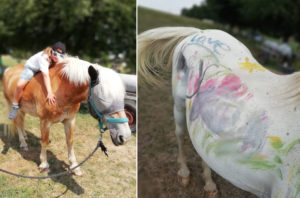 Aktivhof Oelsberg - Ferienprojektwoche 2019 - Hautnah am Pferd - Nachmittagsprogramm - Wallach Otis (Weiß)