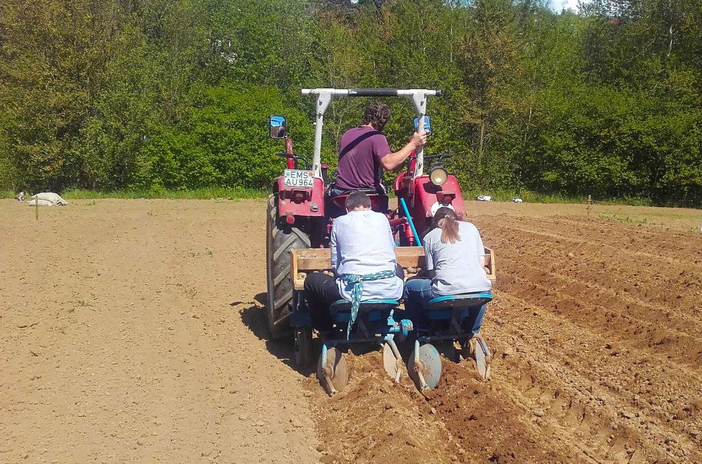 Aktivhof Oelsberg - Erstes Kartoffelsetzen SoLaWi 2017